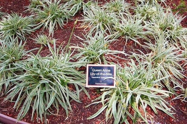 Растения на территории апартаментов в Калифорнии