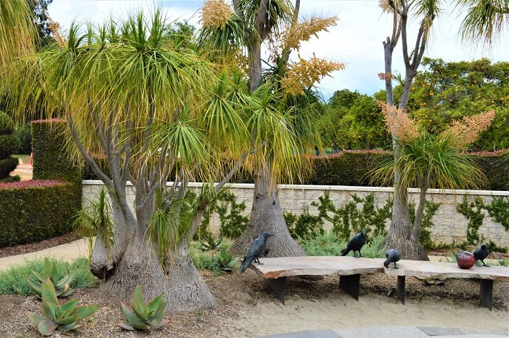 Вороны в ботаническом саду Хантингтона