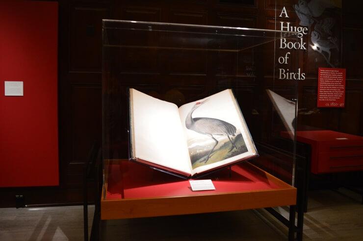 """Книга """"Птицы Америки"""""""