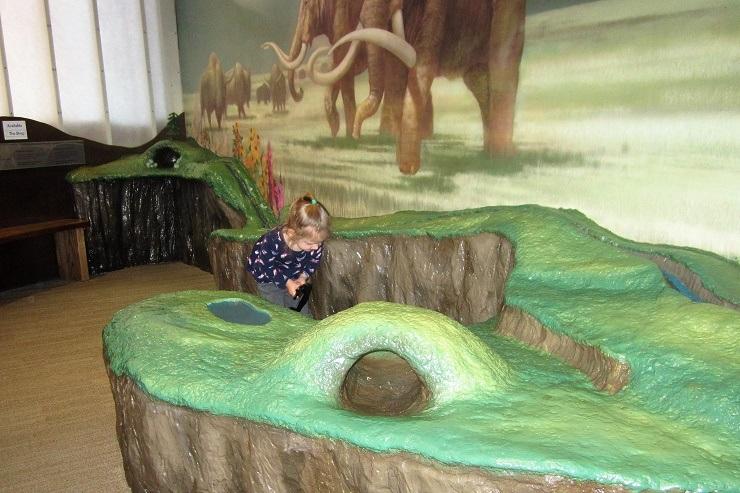Детский музей в Сан-Хосе. Древний лес