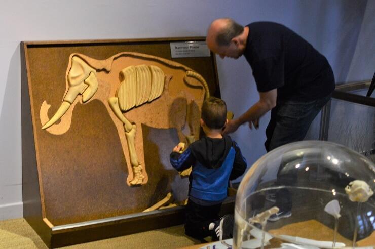 Детский музей в Сан-Хосе. Мамонт-пазл