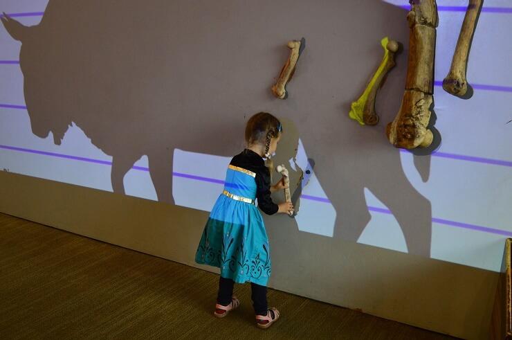 Детский музей в Сан-Хосе. Бизон