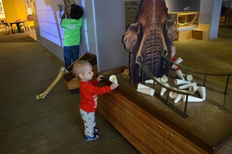 Детский музей в Сан-Хосе. Бивень мамонта