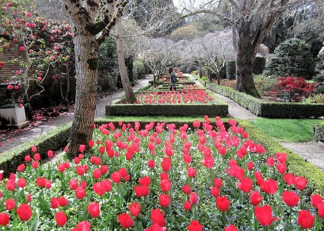 Тюльпаны в Саду Филоли