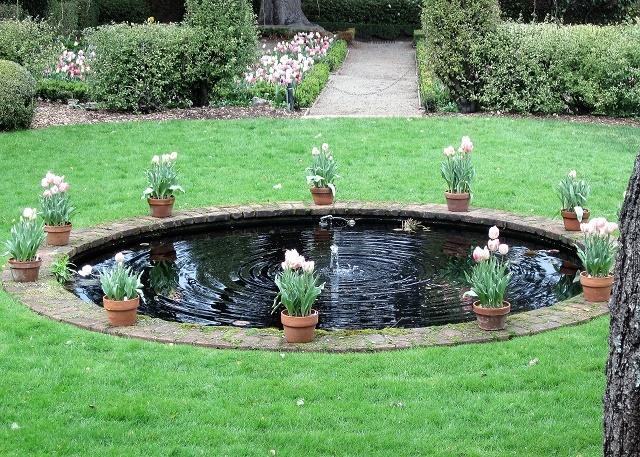 Тюльпаны у бассейна