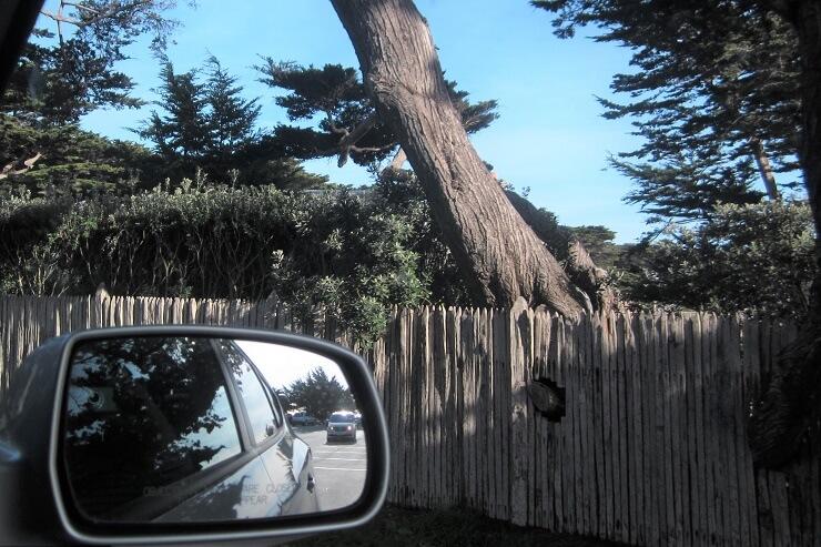 Дырка в заборе для ветви дерева