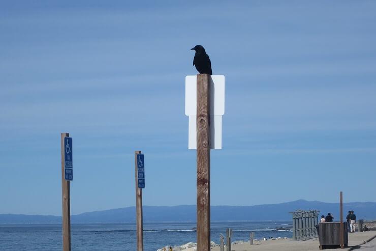 Ворон охраняет 17-мильную дорогу