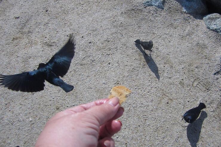 Птицы едят из рук