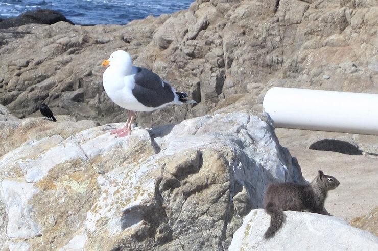 Чайка, суслик и еще какая-то птичка
