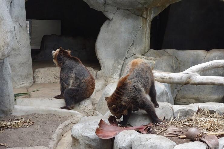 Медведи в зоопарке в Сан-Диего