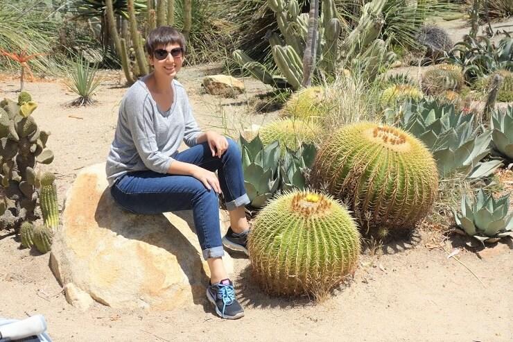 Кактусы в зоопарке в Сан-Диего