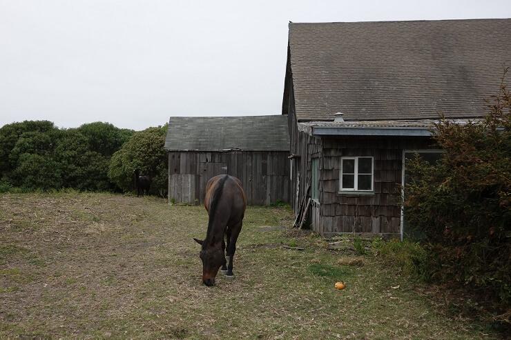 Лошадь в Калифорнии